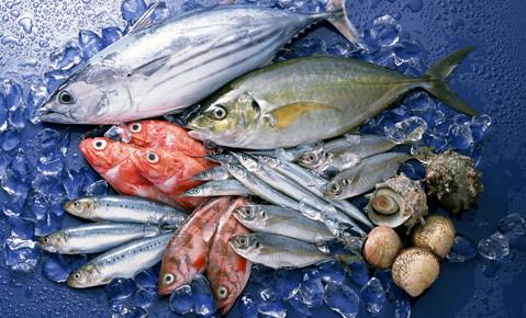 Cá biển là một trong các loại thực phẩm tốt cho sức khỏe